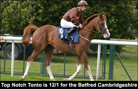 Top Notch Tonto is 12/1 for the Betfred Cambridgeshire